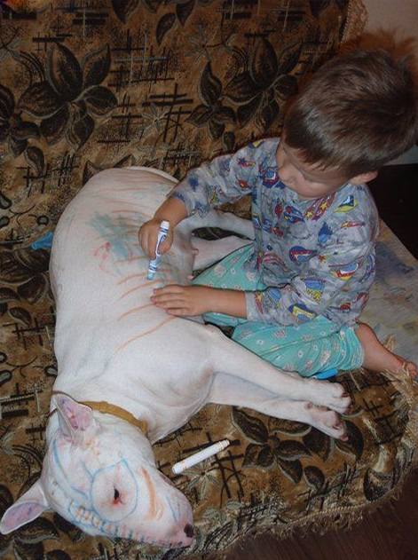 Kid and Bull Terrier Dog having fun